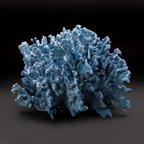 Blue Ridge Coral v.3