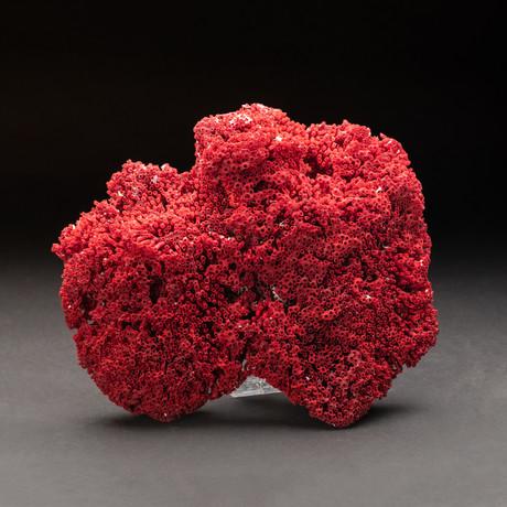 Natural Red Pipe Organ Coral v.1