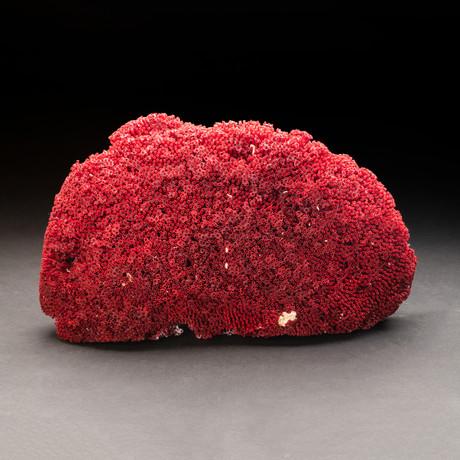 Natural Red Pipe Organ Coral v.2
