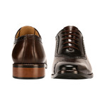Debonair Oxford // Brown (US: 10)
