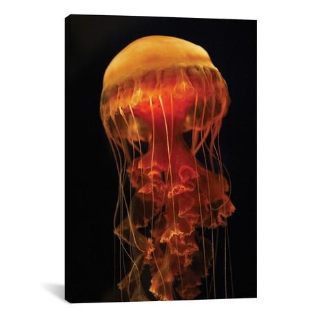 "Black Sea Nettle Spreading Tentacles, Aquarium, Japan // Hiroya Minakuchi (12""W x 18""H x 0.75""D)"