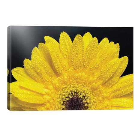 "Flower IV // Glauco Meneghelli (18""W x 12""H x 0.75""D)"
