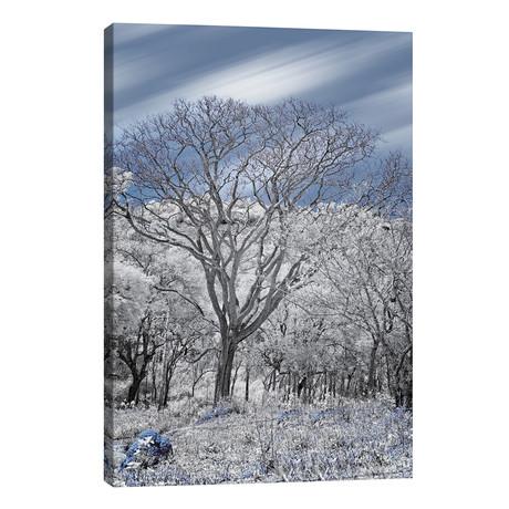 "Dried Tree II  - Sao Paulo, Brazil // Glauco Meneghelli (12""W x 18""H x 0.75""D)"
