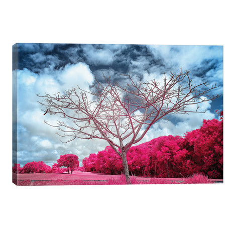 "Dry Tree Magenta - Sao Paulo, Brazil // Glauco Meneghelli (18""W x 12""H x 0.75""D)"