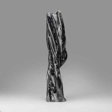 Large // Orthoceras Fossil Statue