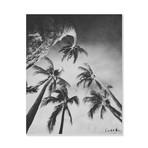 "Swaying Palms (Bw) // High Gloss Panel (12""W x 15""H x 0.5""D)"