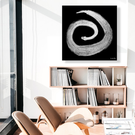 "Python Gyotaku No. 02 (White Black) // High Gloss Panel (15""W x 15""H x 0.5""D)"