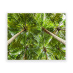 "Tropical Green Canopy // Canvas (12""W x 15""H x 2""D)"