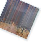 """Through The Path // Canvas (15""""W x 15""""H x 2""""D)"""