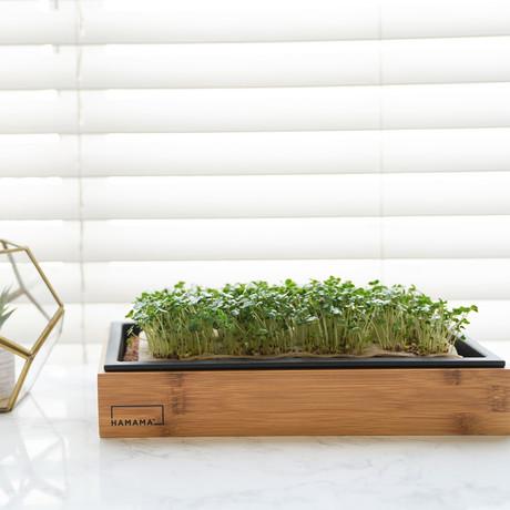 Grow Kit + Bamboo Frame // Super Salad Mix, Hearty Broccoli, Energizing Kale