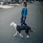 Ultra Reflective 6' Dog Slip Leash (Woof Blue)