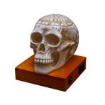 Astrology Skull Lamp