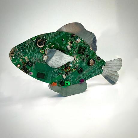 SpinnerByte Fish