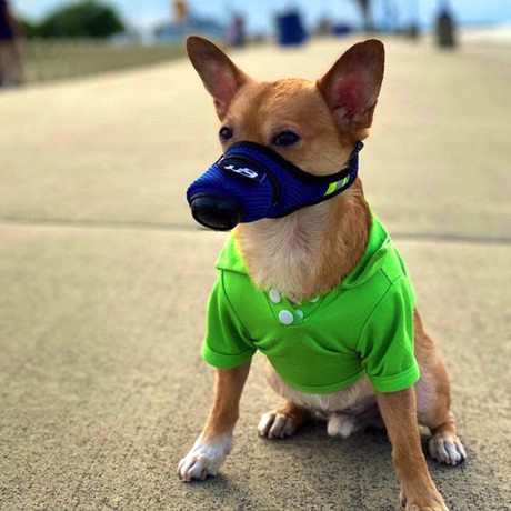 K9 Mask® Air Filter Mask for Dogs // Small