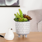 Star Glazed // Ceramic Footed Drop Pot Planter (White)