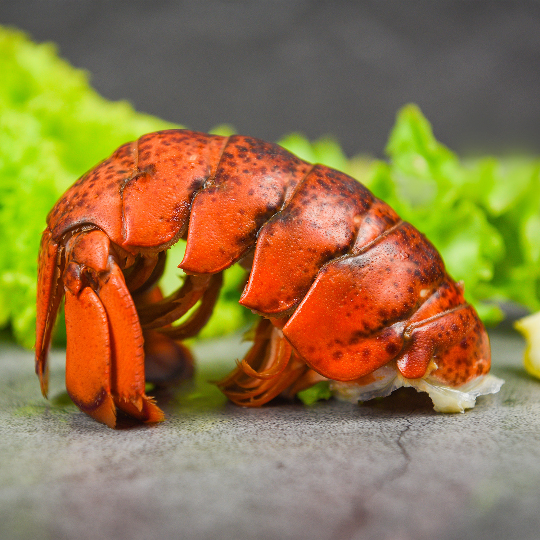 Lobster Tails (40 4 oz Tails // 10 lb) - Northwest Fish Co ...