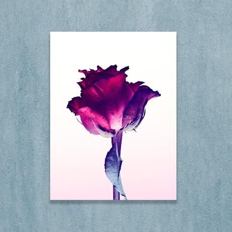 "Single Red Rose (10""W x 12""H x 1""D)"