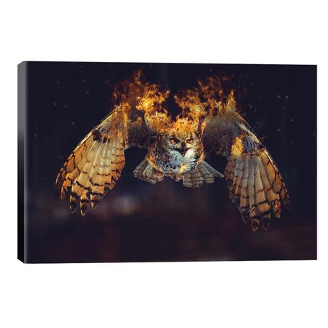 Owl On Fire // Paul Haag