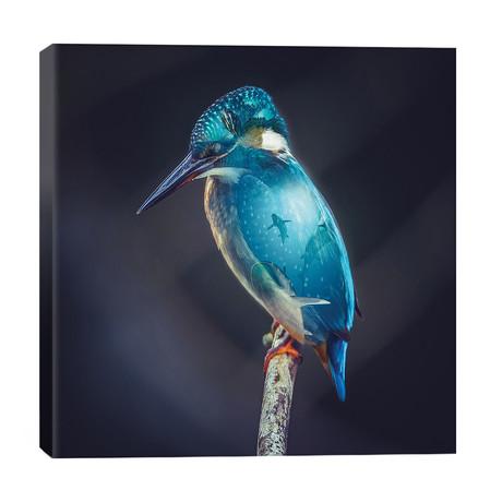 Aquarium Bird // Paul Haag