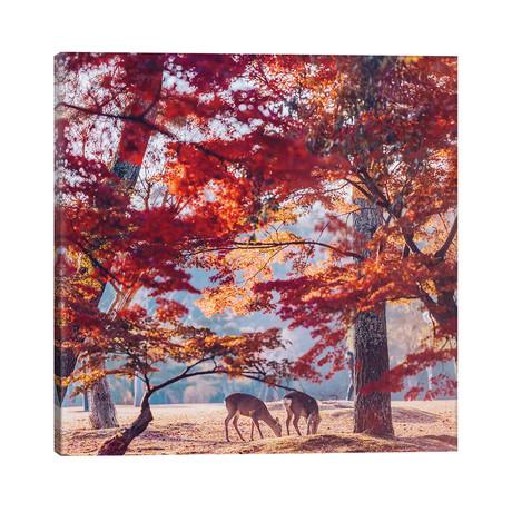 """Autumn Sunrise In Nara // Hobopeeba (26""""W x 26""""H x 1.5""""D)"""