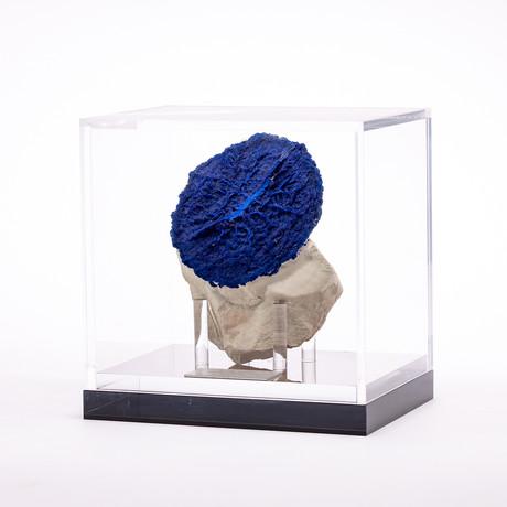 Australian Blue Azurite Sun + Acrylic custom box // Ver. I