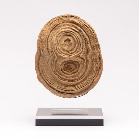 Moroccan Stromatolite + Acrylic Stand // Ver. I