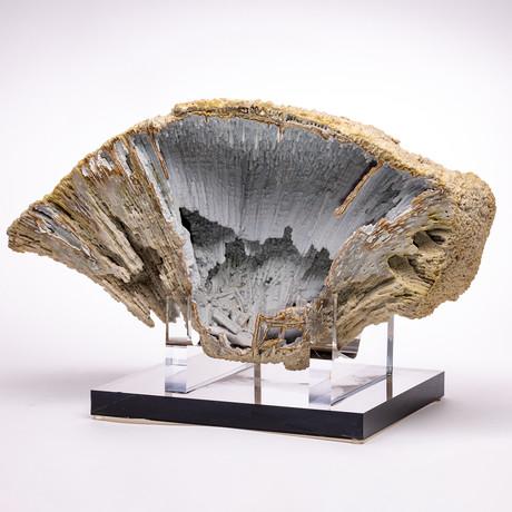 Florida Agatized Fossil Coral + custom acrylic stand // Ver. I