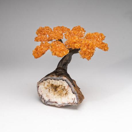 The Money Tree // Genuine Citrine Tree + Citrine Matrix // Custom