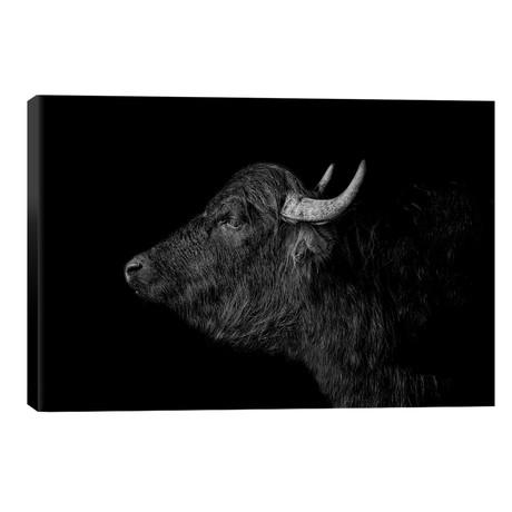 Buffalo // Paul Neville