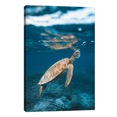 Great Barrier Reef Turtle Underwater // James Vodicka