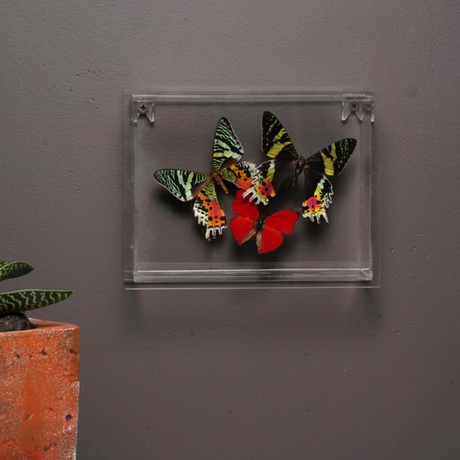 Butterflies in Lucite Frame // Ver. 1
