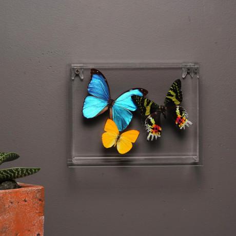 Butterflies in Lucite Frame // Ver. 2
