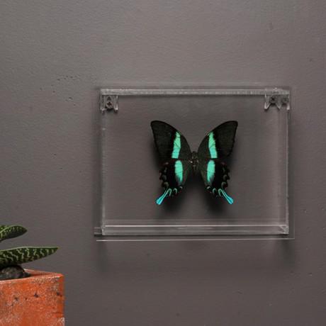 Butterflies in Lucite Frame // Ver. 3