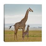 Color Giraffe & Calf // Klaus Tiedge