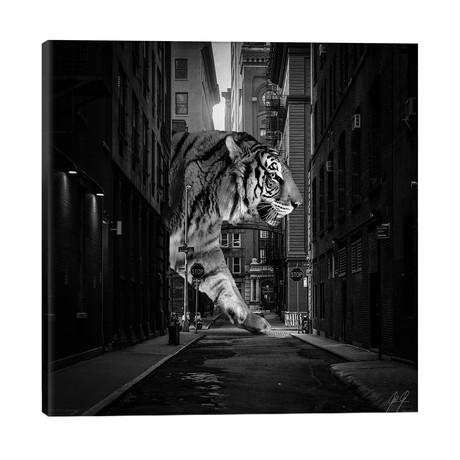 Tiger In NY II // Kathrin Federer
