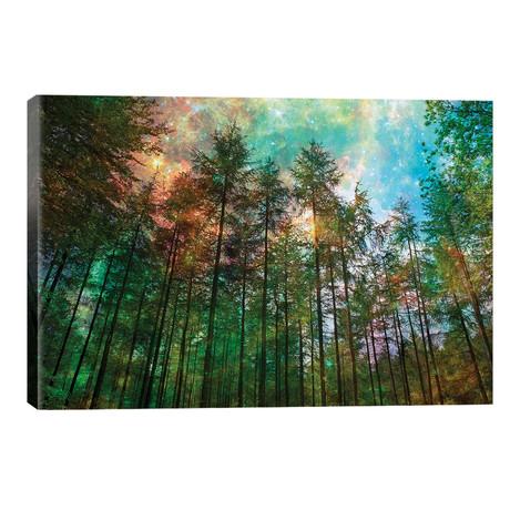 Forest Glow // Ros Berryman