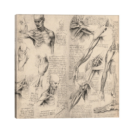 "Sketchbook Studies of Human Body Collage // Leonardo da Vinci (26""W x 26""H x 1.5""D)"