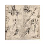 "Sketchbook Studies of Human Body Collage // Leonardo da Vinci (26""W x 26""H x 1.5""D)"