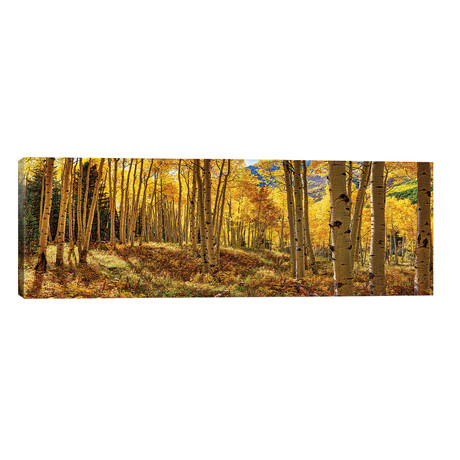"Autumn Aspen Colorado Forest Panorama // OLena Art (60""W x 20""H x 0.75""D)"