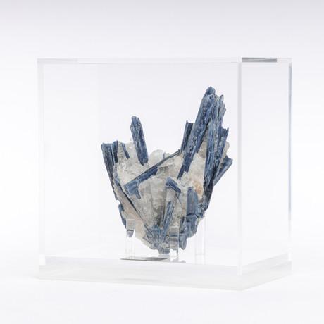 Brazilian Blue Kyanite Crystals & Quartz Matrix + Acrylic Box