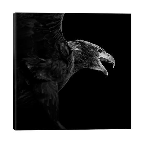 "Eagle In Black & White // Lukas Holas (26""W x 26""H x 1.5""D)"