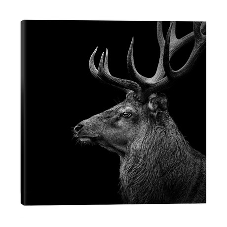 "Deer In Black & White // Lukas Holas (26""W x 26""H x 1.5""D)"