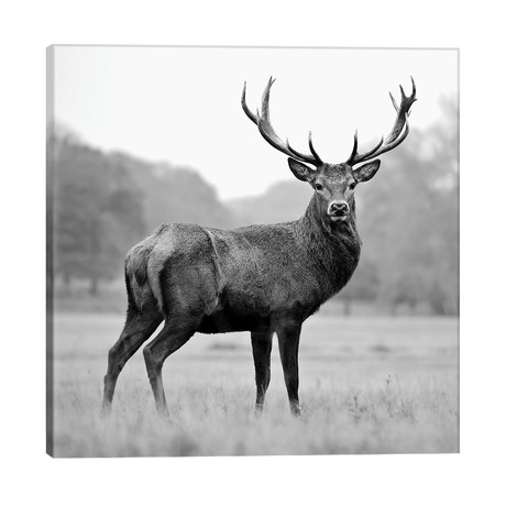 Proud Deer // PhotoINC Studio