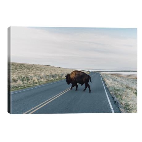Buffalo Bison // Chelsea Victoria