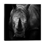 "Rhino In Black & White // Lukas Holas (26""W x 26""H x 1.5""D)"