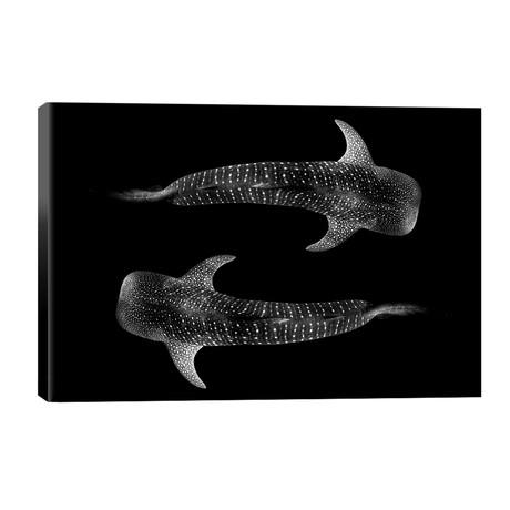 Yin & Yang Whale Shark // Jordan Robins