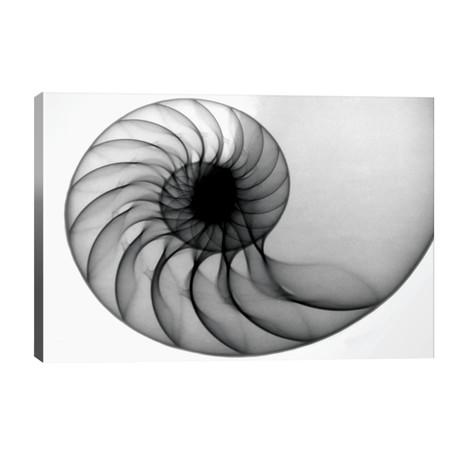 Nautilus // Hong Pham