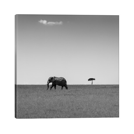 "Elephant And The Friendly Cloud... // Ali Khataw (26""W x 26""H x 1.5""D)"
