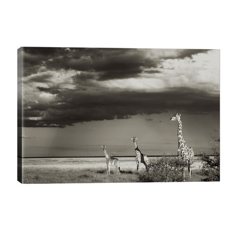 B&W Giraffe Trio // Klaus Tiedge