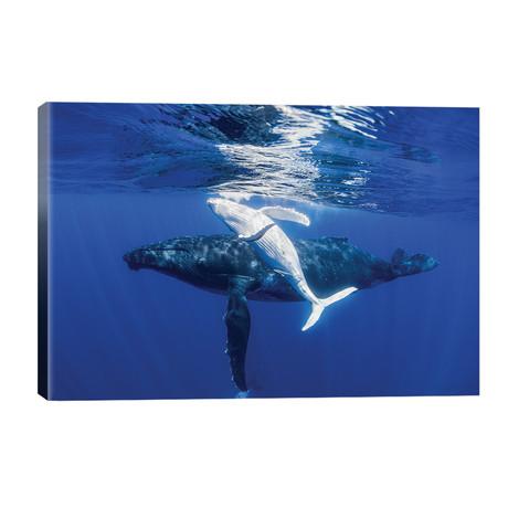 The Dancing Whale // Jordan Robins